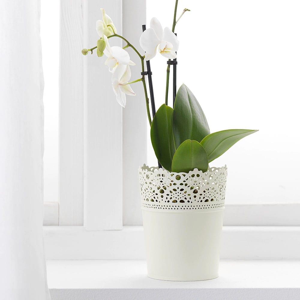 گلدان ایکیا مدل SKURAR سایز 12